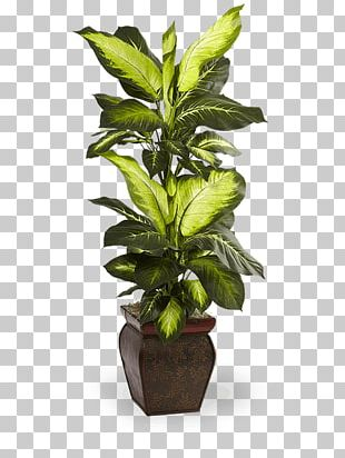 Leaf Swiss Cheese Plant Flowerpot Houseplant PNG