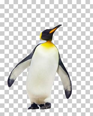 CfE Higher Geography Course Notes King Penguin Fauna PNG