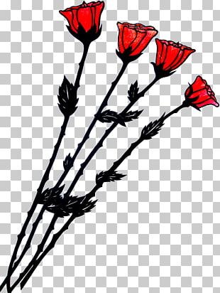 Red Rose Drawing White Color PNG