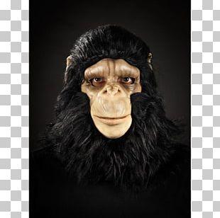 Common Chimpanzee Gorilla Monkey Mask Snout PNG