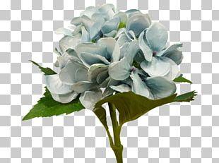 Hydrangea Floral Design Cut Flowers Flower Bouquet PNG