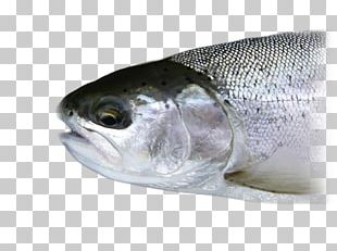 Sardine Fisheries Science Fishery Fish Products PNG