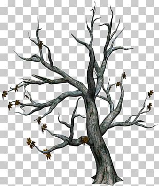 Tree Branch Autumn PNG
