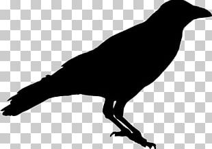 American Crow Silhouette Raven Stencil PNG