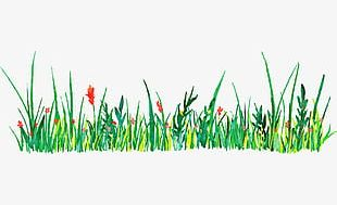 Green Grass Watercolor Decorative Pattern PNG