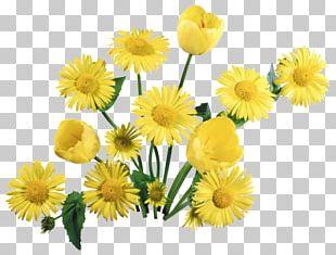 Tulip Flower Bouquet Desktop 1080p PNG