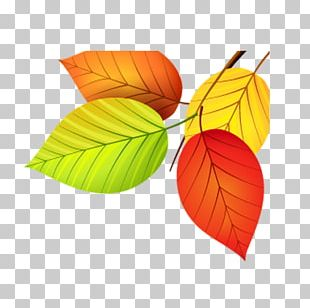 Autumn Leaf Color Euclidean PNG