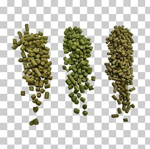 Beer Brewing Grains & Malts Hops Cascade Ahtanum PNG