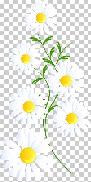 Floral Design Line Plant Stem PNG