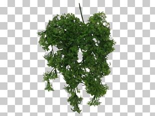 Leaf Vegetable Rock Learning Shrub PNG