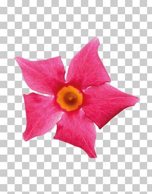 Petal Cut Flowers Pink M Flowering Plant PNG