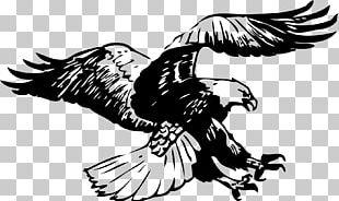 Bald Eagle Black-and-white Hawk-eagle Black And White PNG
