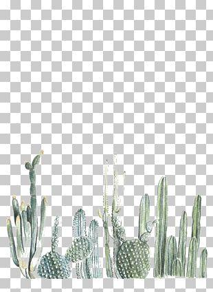 Cactaceae Paper Printing Painting Printmaking PNG