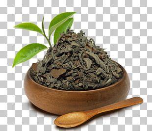 Nilgiri Tea Hōjicha Darjeeling Tea Green Tea PNG