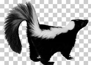 Skunk PNG