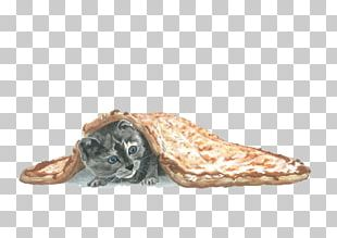 Cat Kitten Pizza Blanket PNG