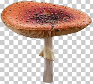 Edible Mushroom Photography PNG