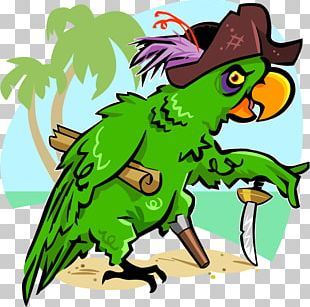 Bird Cockatoo Pirate Parrot Piracy Cartoon PNG