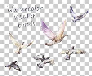 Drawing Birds PNG