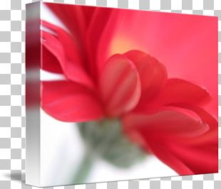 Rose Family Gallery Wrap Red Canvas Art PNG