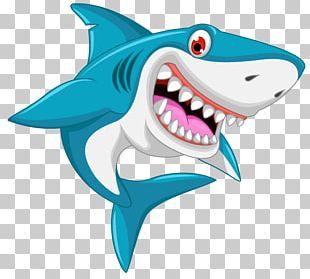 Shark Drawing Cartoon PNG