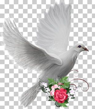 Colombe Peace Doves As Symbols PNG