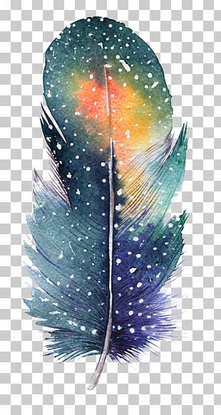 Feather Bird Drawing Color Painting PNG