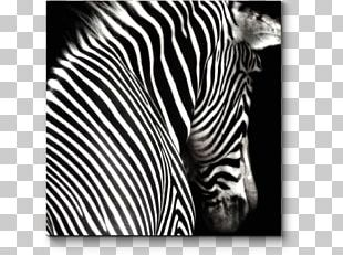 Black And White Zebra Painting Photography PNG