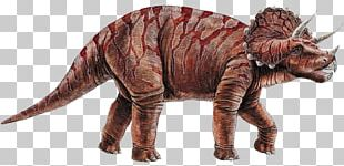 Triceratops Dinosaurs PNG