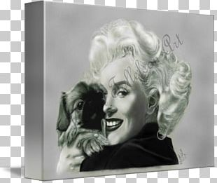 Marilyn Monroe Stock Photography Frames PNG