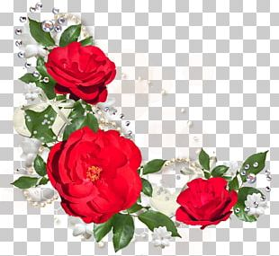 Moutan Peony Flower Rose Red PNG