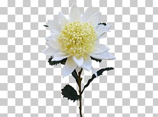 Cut Flowers Artificial Flower Flower Bouquet Floristry PNG