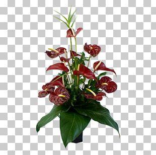 Anthurium Andraeanum Flower Bouquet Floristry Floral Design PNG
