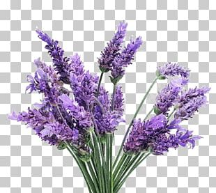 Lavender Bunch PNG