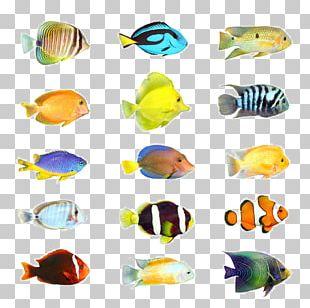Tropical Fish Stock Photography Aquarium PNG