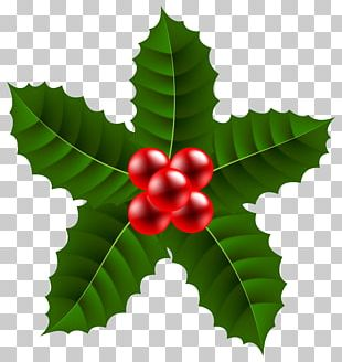 Christmas Holly Clipart Png.Xmas Holly Png Images Xmas Holly Clipart Free Download
