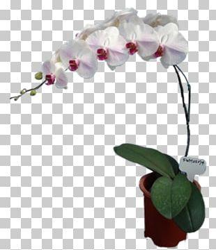 Moth Orchids Cut Flowers Floral Design Artificial Flower PNG