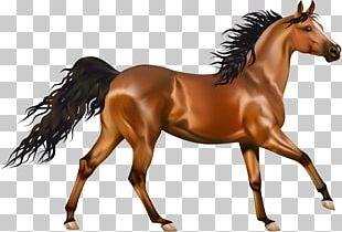 Arabian Horse Pony Equestrianism PNG