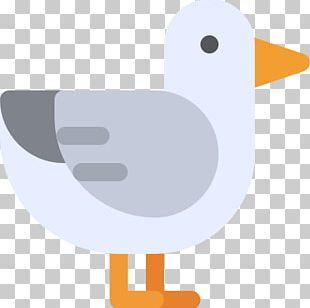 Duck Water Bird Vertebrate Anatidae PNG