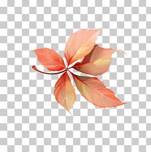 Petal Leaf PNG