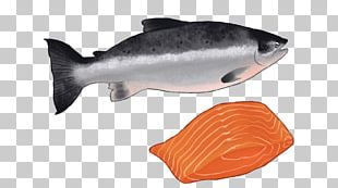 Coho Salmon Fish Products Salmon As Food Oily Fish PNG