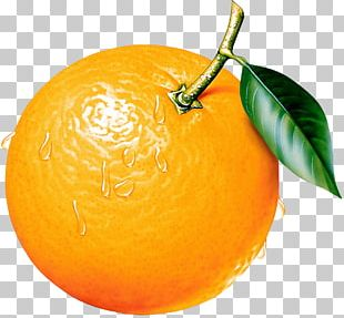 Citrus Xc3u2014 Sinensis Orange Fruit PNG