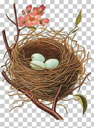 Edible Bird's Nest Bird Nest PNG