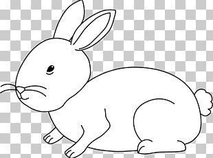 Domestic Rabbit Hare Dutch Rabbit White Rabbit PNG