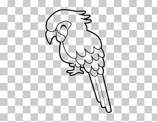 Parrot Bird Military Macaw Drawing Coloring Book PNG