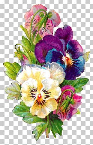 Pansy Floral Design Line Art PNG