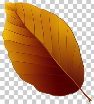File Formats Filename Extension Computer File PNG