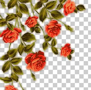 Garden Roses Beach Rose Flower Red PNG