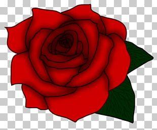 Garden Roses Cabbage Rose Floribunda Floral Design Cut Flowers PNG