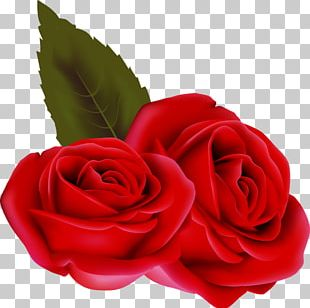 Valentine's Day Beach Rose PNG